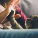 person-giving-high-five-to-grey-cat-38867